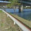 3月23日金曜日 水源公園の様子