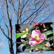 花彩々  冬晴れ