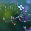 photo poem - あなたの涙 -