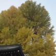 秋の高山・白川郷