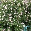 5月の花便り