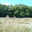 今日の化石河原