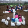 おいもほり13:収穫