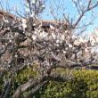 やっと春が、、、。
