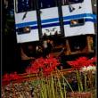 汽車と彼岸花