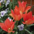 庭の花と、ご質問におこたえしてと。