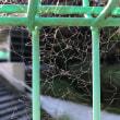 ヤサグレ蜘蛛の巣