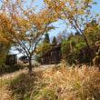 由布院の桜並木ですがすでに葉桜に
