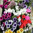 花咲く5月