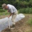 冬キャベツと白菜の苗を植え付け