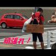 頑張れ!徒歩で日本一周 🙀【猫日記こむぎ&だいず】