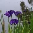 花の文化園 バラ園と園内の花々