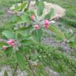 ふくしま くだものの花