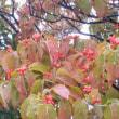 夏の終わり、秋の始まり―道端の花、実