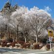 樹氷に雪花が咲いたよう