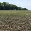 米国大豆生育状況