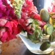 南房総の花々