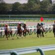 阪神競馬ドキュメント ~2017年秋 愛馬の応援に行ったらまさかのあの競馬好きタレントに遭遇!!の巻~