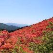 つつじの季節に葛城山へ