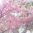 spring「なばなの里」