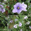 フェアリーベル・ライトブルーの花は
