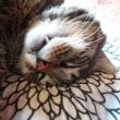 雨の日は100万ドルの寝顔猫
