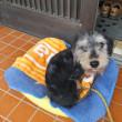 うちの仔になって、もう4年♪沖縄の貸別荘犬