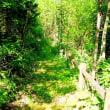 森の遊歩道(16)