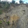 みかん山が少し被害に遭いました