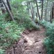 【北ア】蝶ヶ岳から常念岳へ