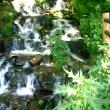 < 涼しくて 美味しい湧き水の玉原湿原。>