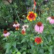 雨に咲く花色々