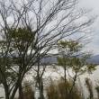 冬の柴山潟・・・・