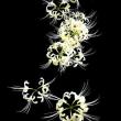 幻想的な白の舞