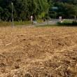 ひまわりの収穫8'20