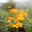 雨の中 川西能勢口へ