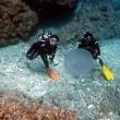 ま、まんたさんは突然に!沖縄ダイビング 那覇シーマリン