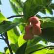 桃と辛夷の行進曲