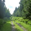 久しぶりに林道32キロ走