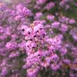 公園の桜もうすぐ