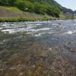 5月22日 吉田川・長良川でアマゴ釣り!