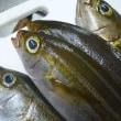 旬. 初夏の魚:伊佐木(いさき)と 「母の日」いろいろグルメ ^^! ブログ