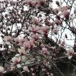今日のお花      Today's f
