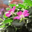Re.11月の我が家の植物たち
