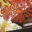 写虚ではない「写真」 小京都の秋