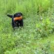 ☆☆☆ 田舎では野遊びが娯楽/然し良く降る雨ですなぁ~水曜日・・・