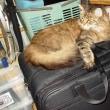カホン・バッグと同居猫