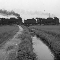 蒸気機関車 田圃を走る