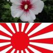 韓国って、社会的地位の高い人にアタマおかしい人が多い。Part2 :ムクゲが日章旗の象徴だと?