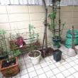 庭掃除とウクレレ練習